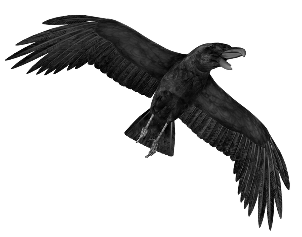 Crow Png Hd PNG Image - Crow HD PNG