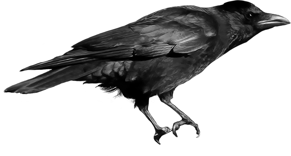 . PlusPng.com Crow PNG image PlusPng.com  - Crow HD PNG