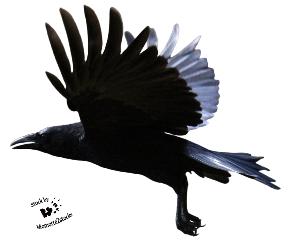 Cut-out stock PNG 122 - great flight of the crow by Momotte2stocks on  DeviantArt - Crow HD PNG
