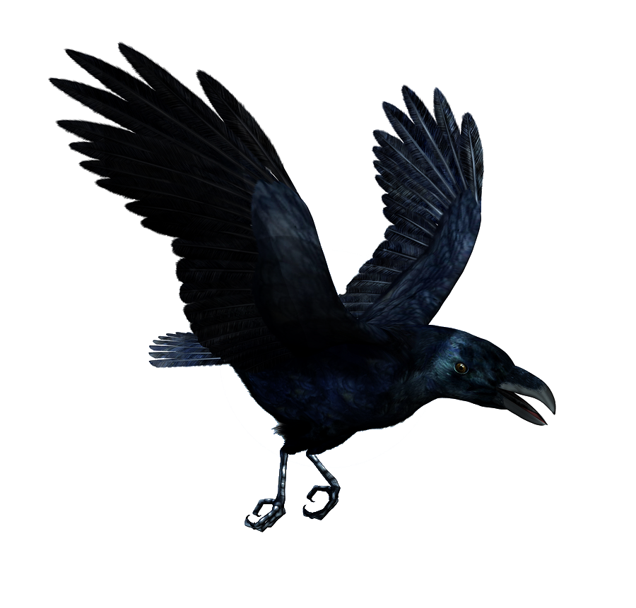 Raven Flying PNG HD - Crow HD PNG