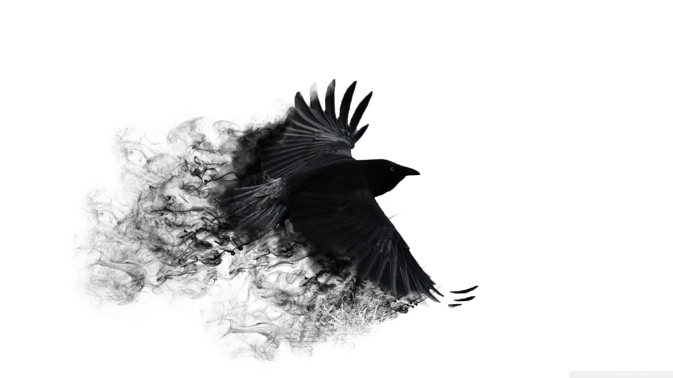 Crow HD PNG - 118747
