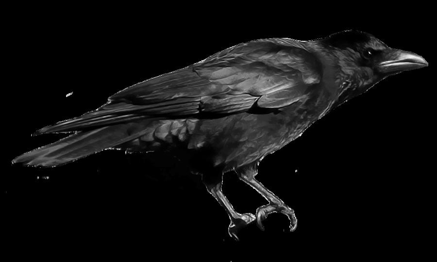Crow PNG - 10305