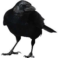 Crow PNG - 10309