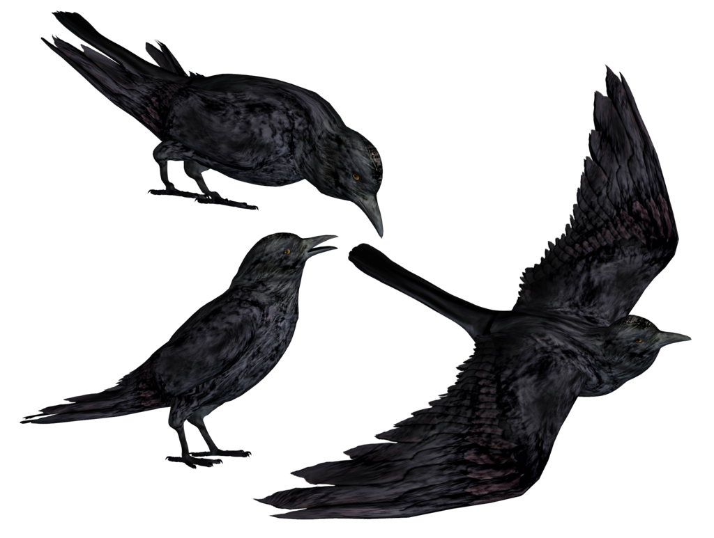 Crows PNG Stock by Roy3D - Crow PNG