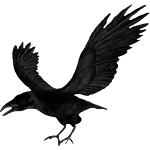 NLD Crow.png - Crow PNG