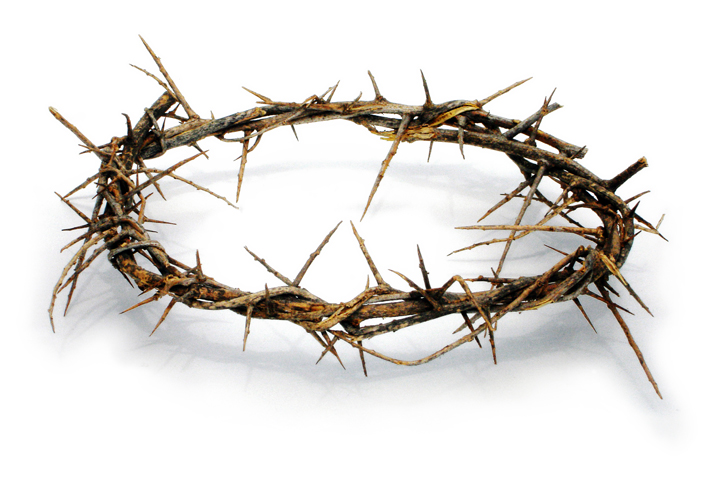 crown of thorns-1 - Crown Of Thorns PNG HD