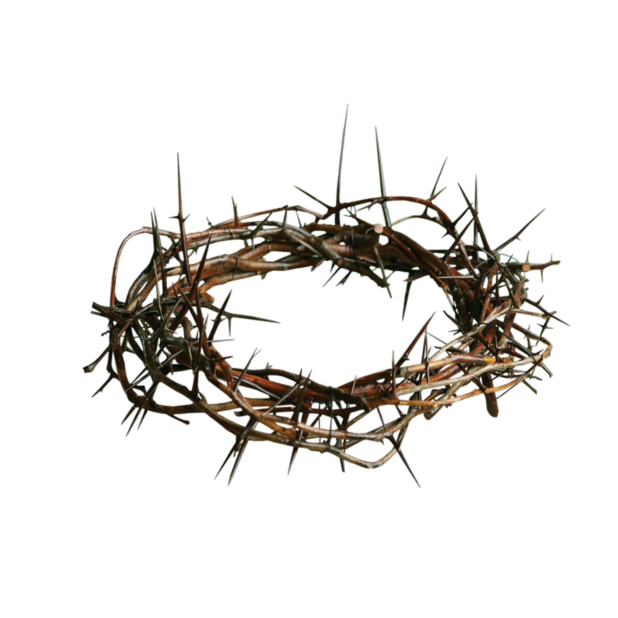 . PlusPng.com Crown-Of-Thorns.png PlusPng.com  - Crown Of Thorns PNG HD