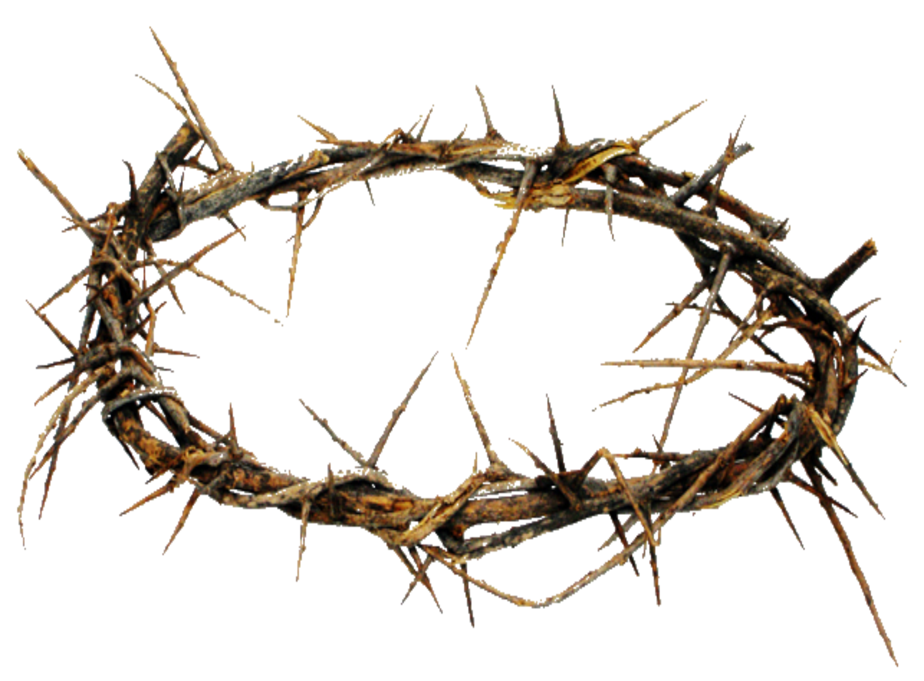 . PlusPng.com crown of thorns.png PlusPng.com  - Crown Of Thorns PNG HD