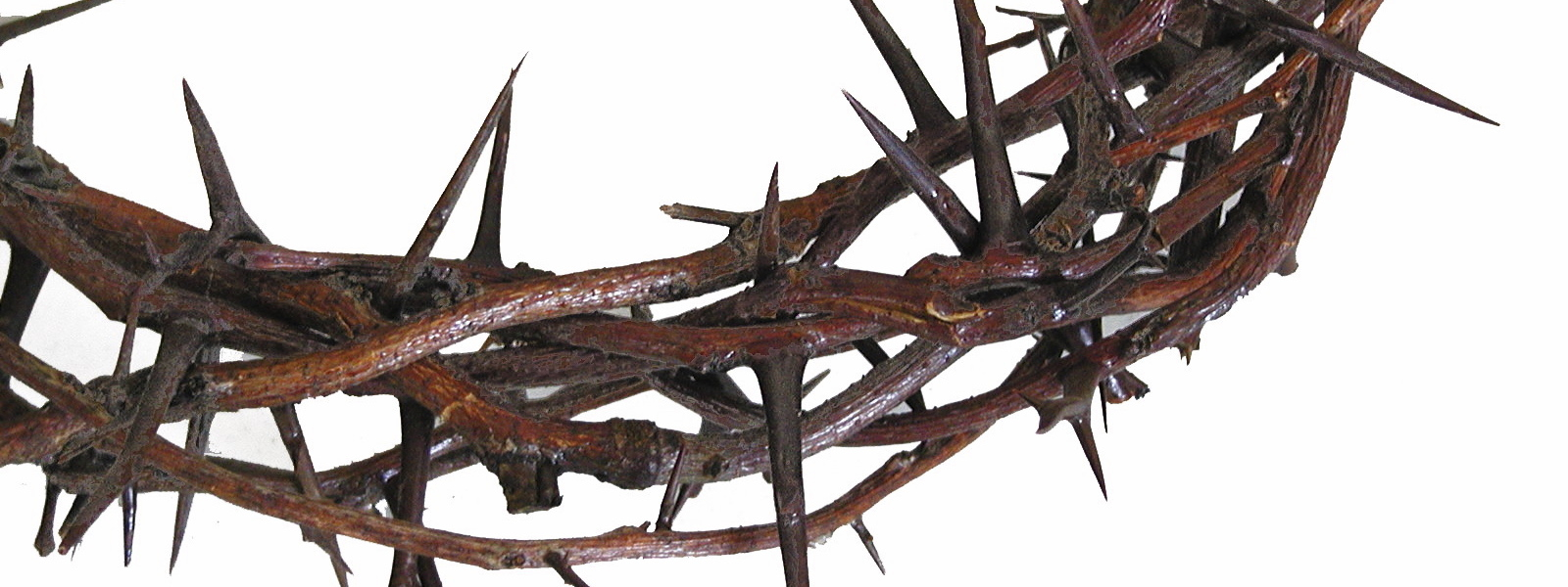 Crown Of Thorns PNG HD - 127246