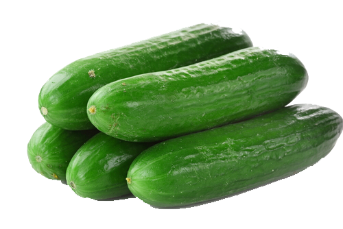 Cucumbers are scientifically known as Cucumis sativus and belong to the  same botanical family as melons (including watermelon and cantaloupe) and  squashes PlusPng.com  - Cucumber HD PNG