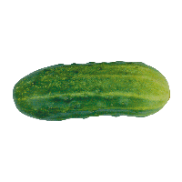 Green Cucumber Png Image PNG