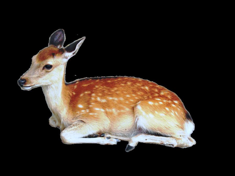 Cute Animal PNG HD - 127940