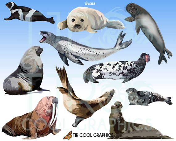 Seals Digital Realistic Clip Art, PNG, Printable, Commercial, Harp Seal,  Walrus, Sea Lion, Ocean Animals, Sea Life, Cute, Funny from JoyCreating on  Etsy PlusPng.com  - Cute Baby Seal PNG