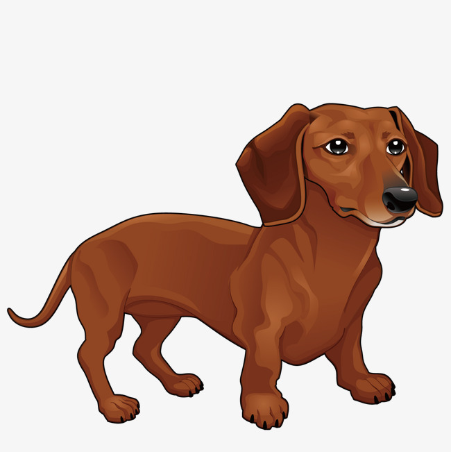 Vector Dachshund, Yellow, Small, Animal PNG and Vector - Cute Dachshund PNG