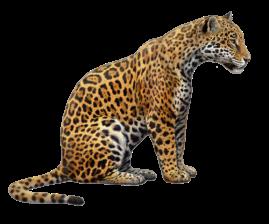 Cute Jaguar PNG - 70059