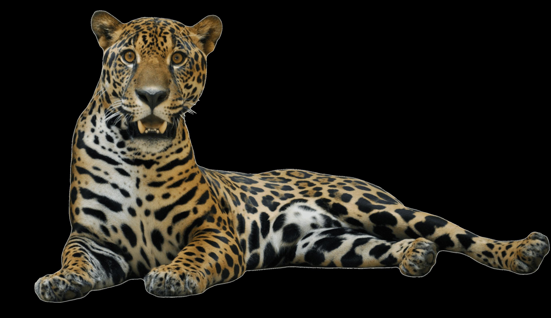Cute Jaguar PNG - 70054