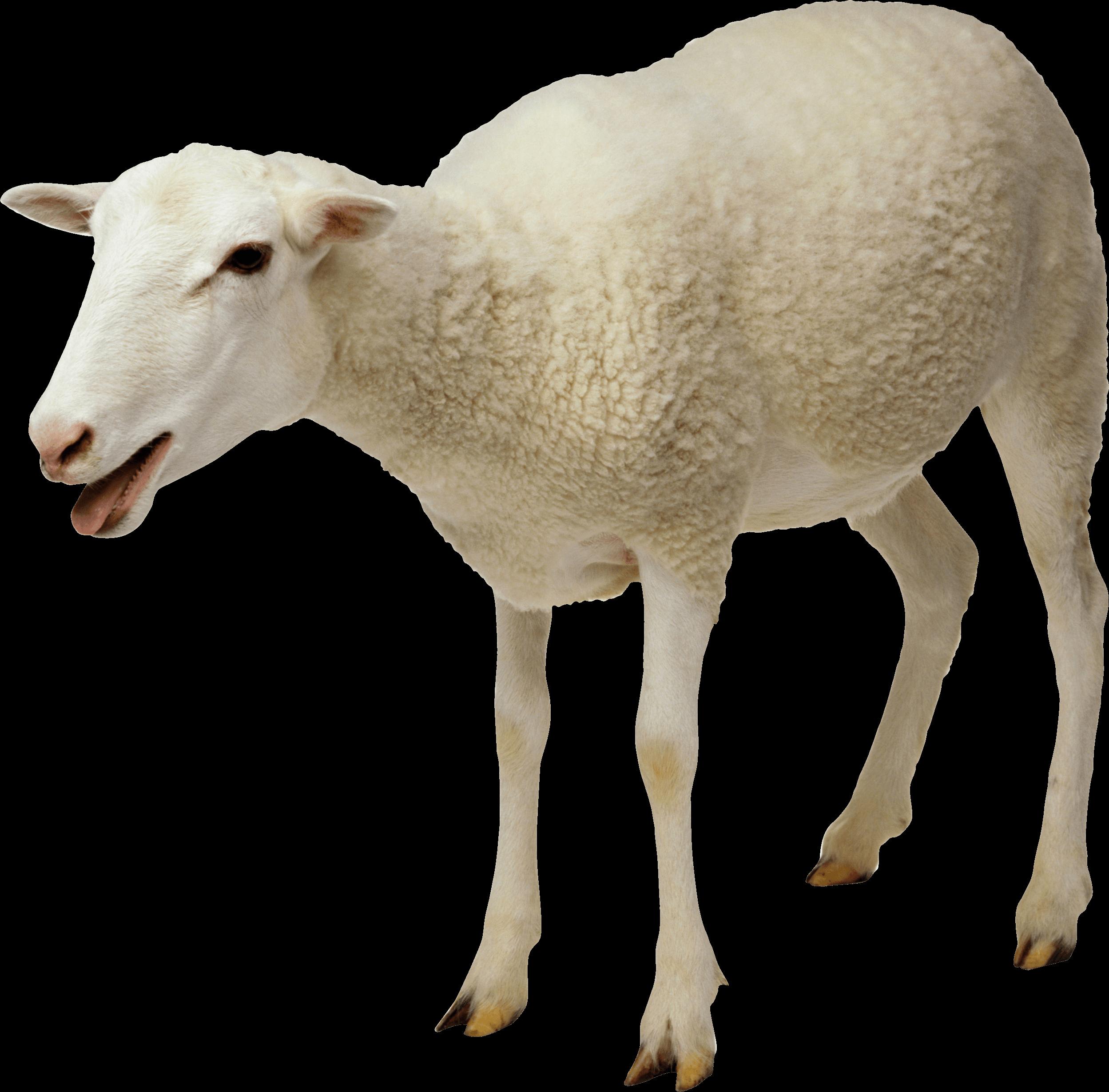 Sheep Png Image PNG Image - Sheep PNG - Cute Lamb PNG HD