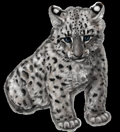 Cute snow leopard by silvercrossfox-d6fsw1b.png - Cute Leopard PNG