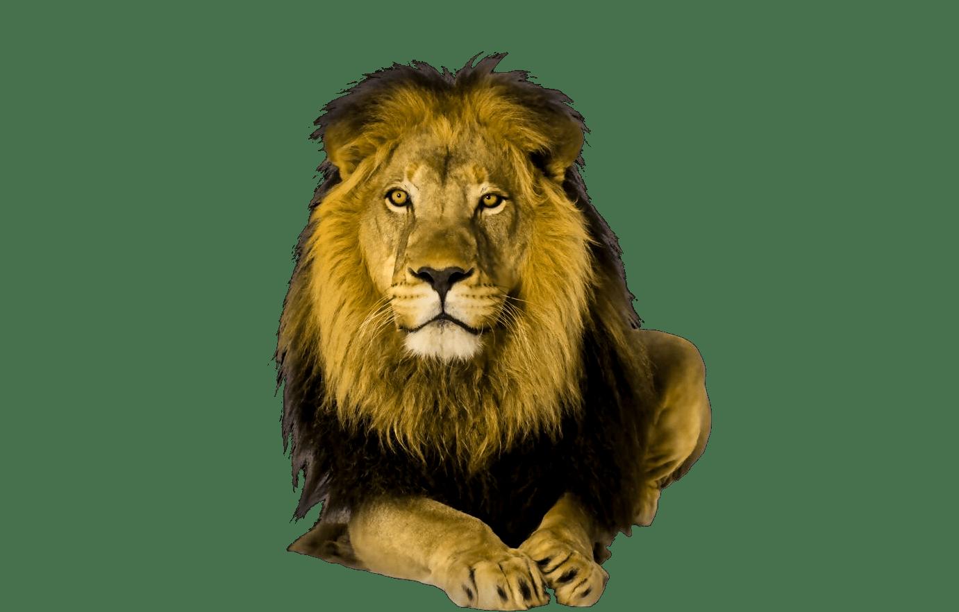 Cute Wild Animal PNG - 160608