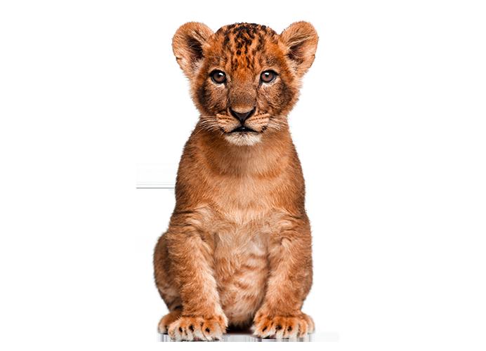 Cute Wild Animal PNG - 160613