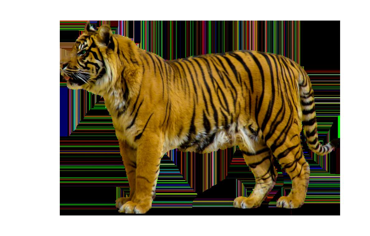 Cute Wild Animal PNG - 160612