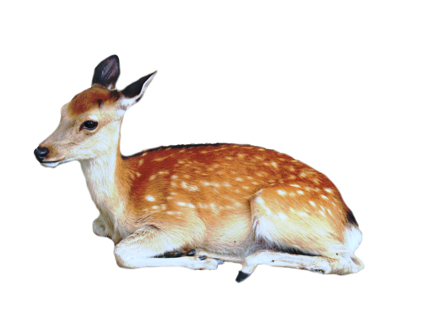 Cute Wild Animal PNG - 160601
