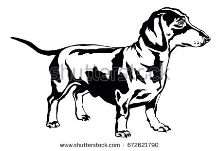 Decorative portrait of standing in profile dog dachshund, vector isolated  illustration in black color on - Dachshund PNG Black And White