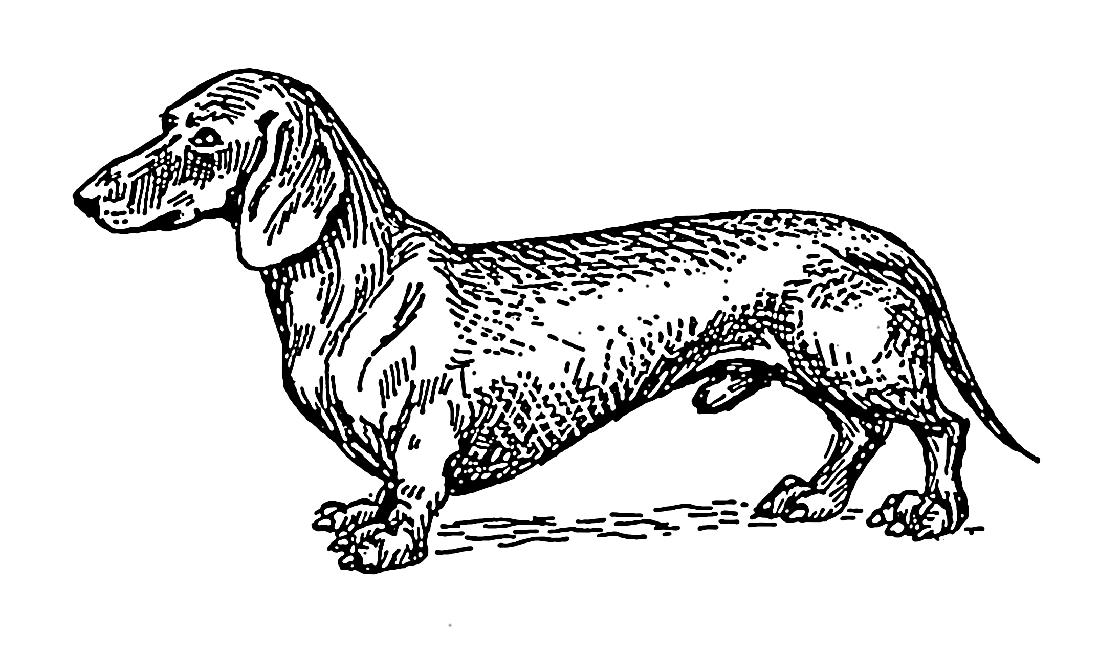 File:Dachshund (PSF).png - Dachshund PNG Black And White
