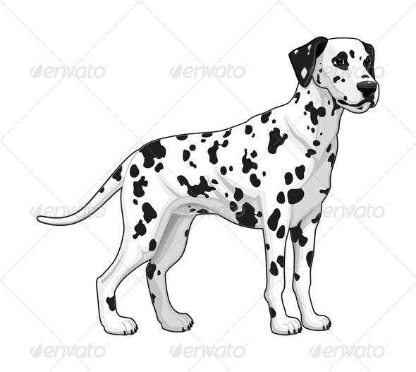 Dalmatian - Dalmatian Dog PNG