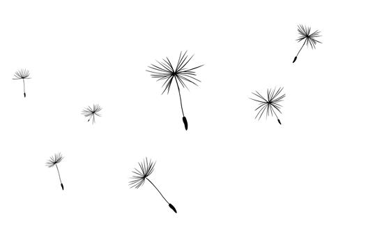 Dandelion HD PNG