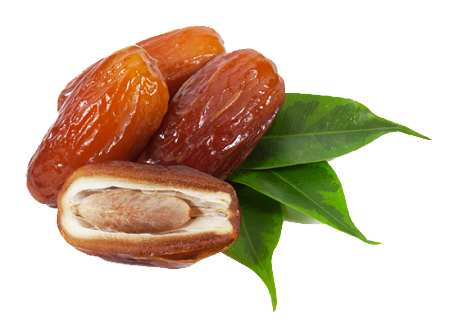 Date Palm PNG - 24768