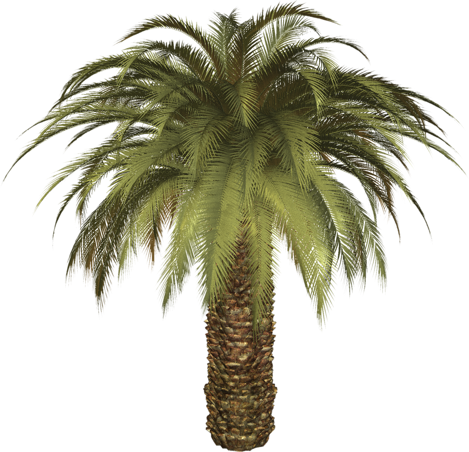 Date Palm PNG - 24759
