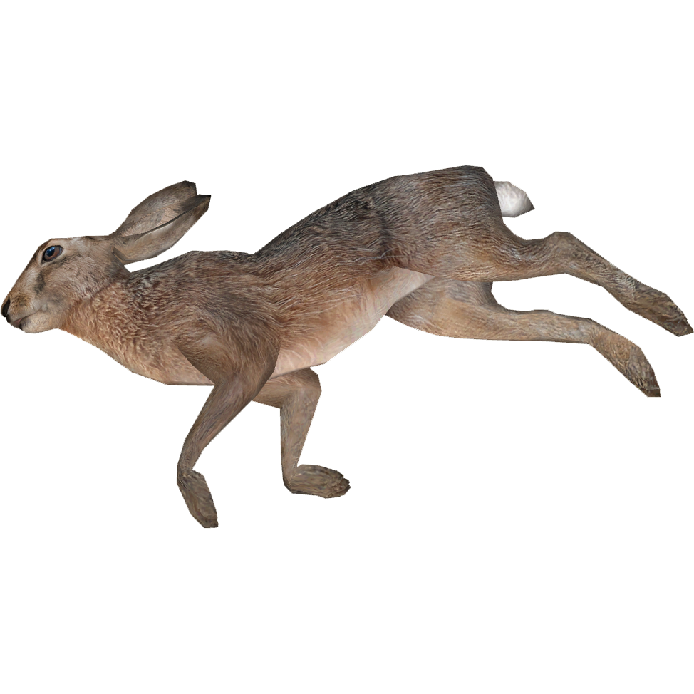 Dead Animal PNG