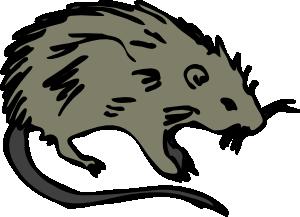 Dead Rat PNG - 67648