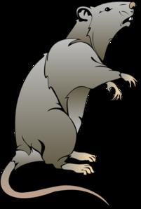 Dead Rat PNG - 67649