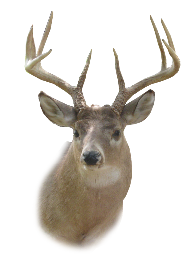 Deer Head PNG HD - Dear PNG HD