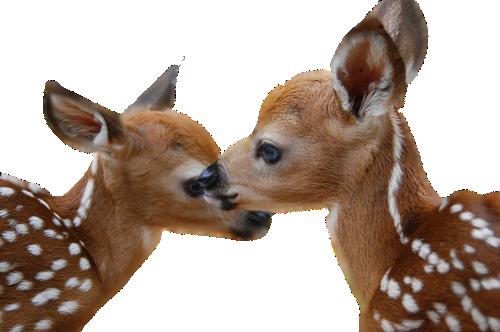 Free png deer images. - Dear PNG HD