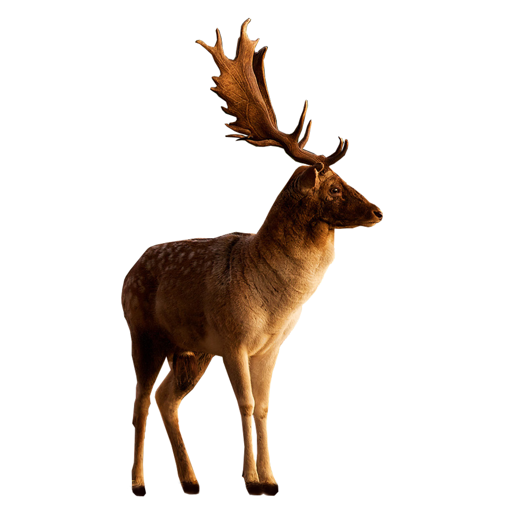 Deer HD PNG