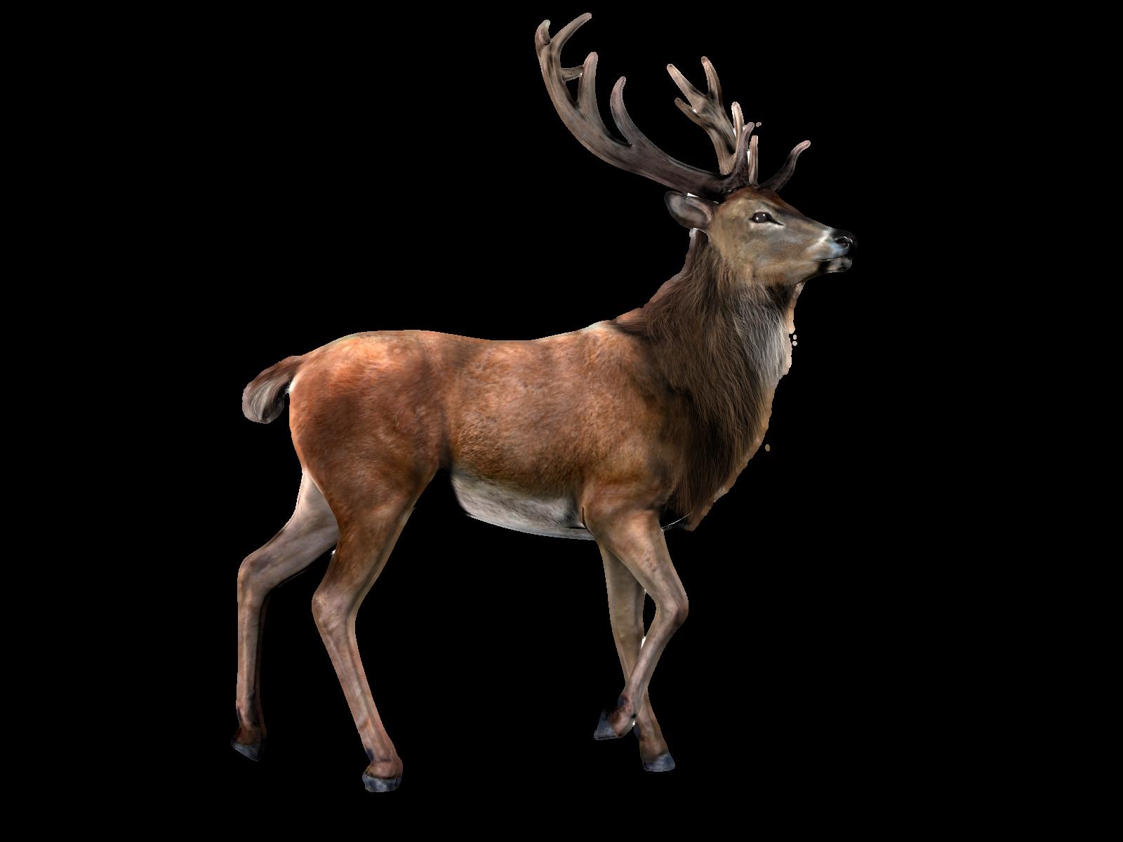 Deer With Transparent Background PNG - Deer HD PNG