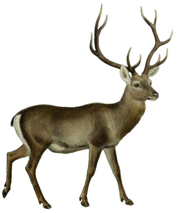 File:The deer of all lands (1898) Hangul white background.png - Deer HD PNG