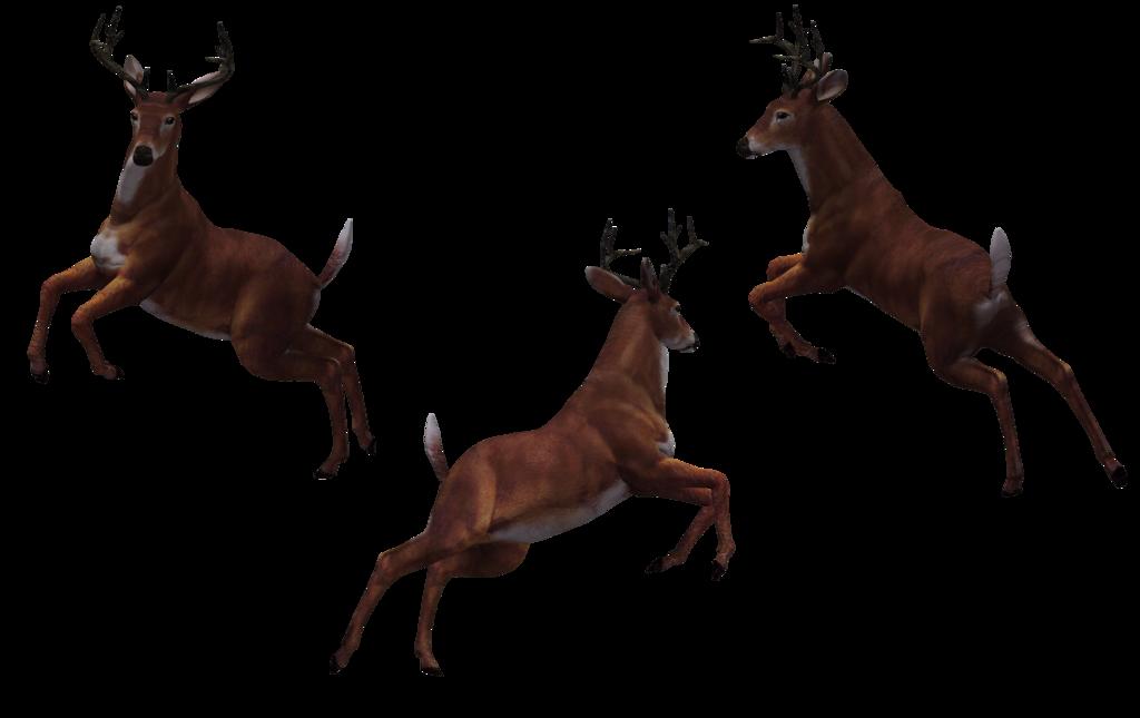 Deer - Buck 10 by Free-Stock-By-Wayne - Deer PNG