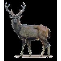 Deer High-Quality Png PNG Image - Deer PNG
