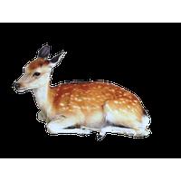 Deer PNG - 21584