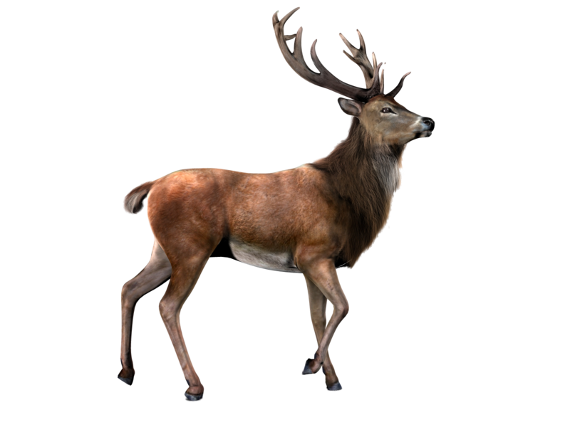 Elk PNG by LG-Design - Deer PNG