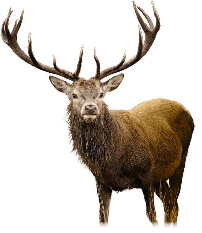 Deer PNG HD - 131770