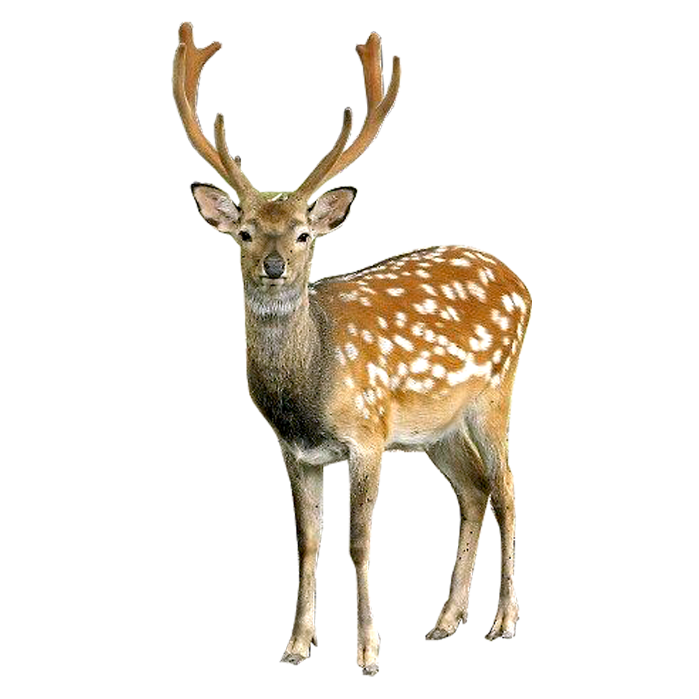 Deer Png File PNG Image - Deer PNG HD