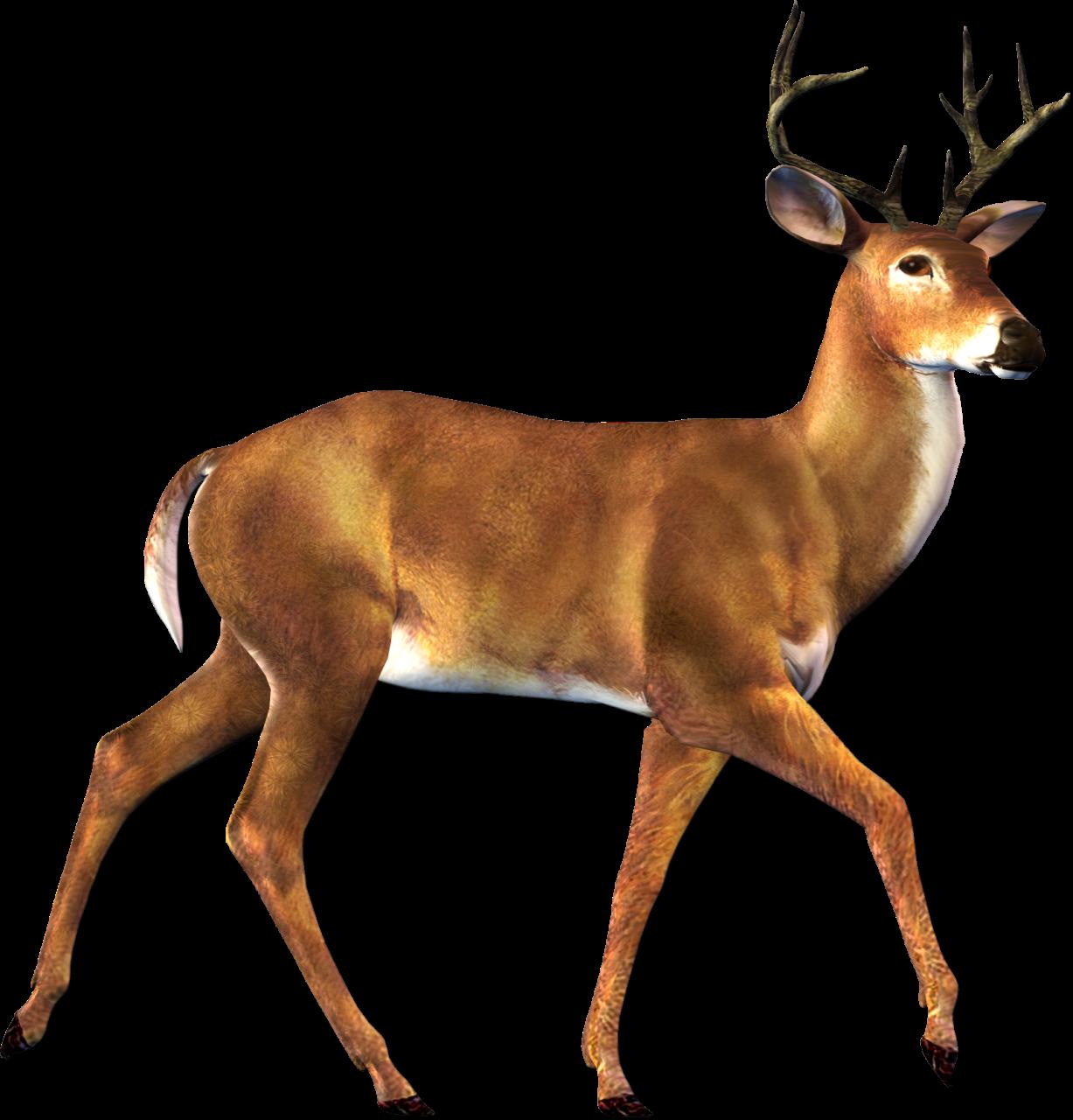 Deer PNG HD - 131763