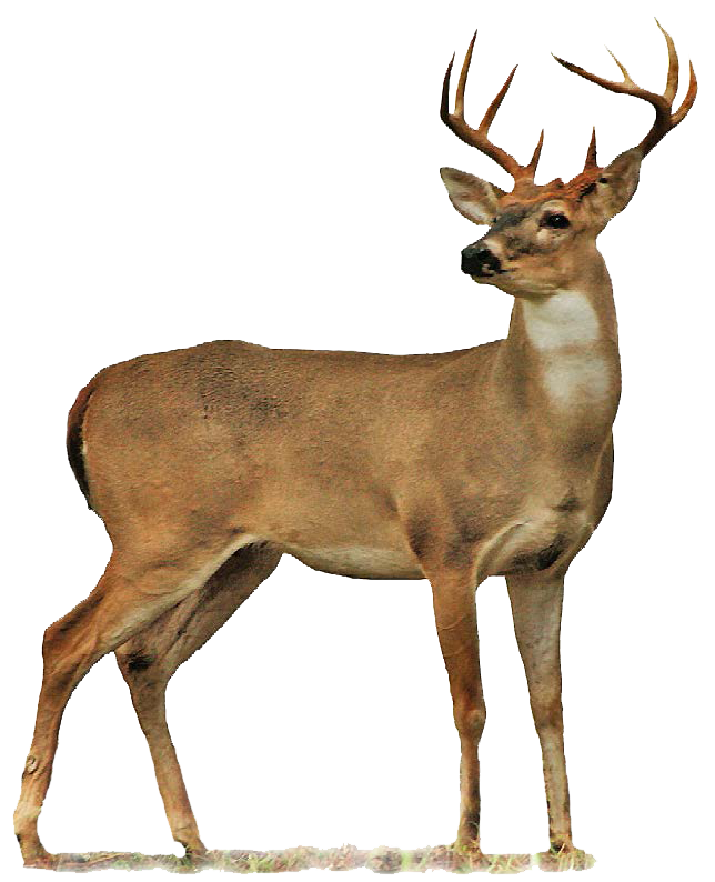 Deer PNG images free download - HD Wallpapers - Deer PNG HD