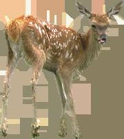 Deer PNG Pic - Deer PNG HD