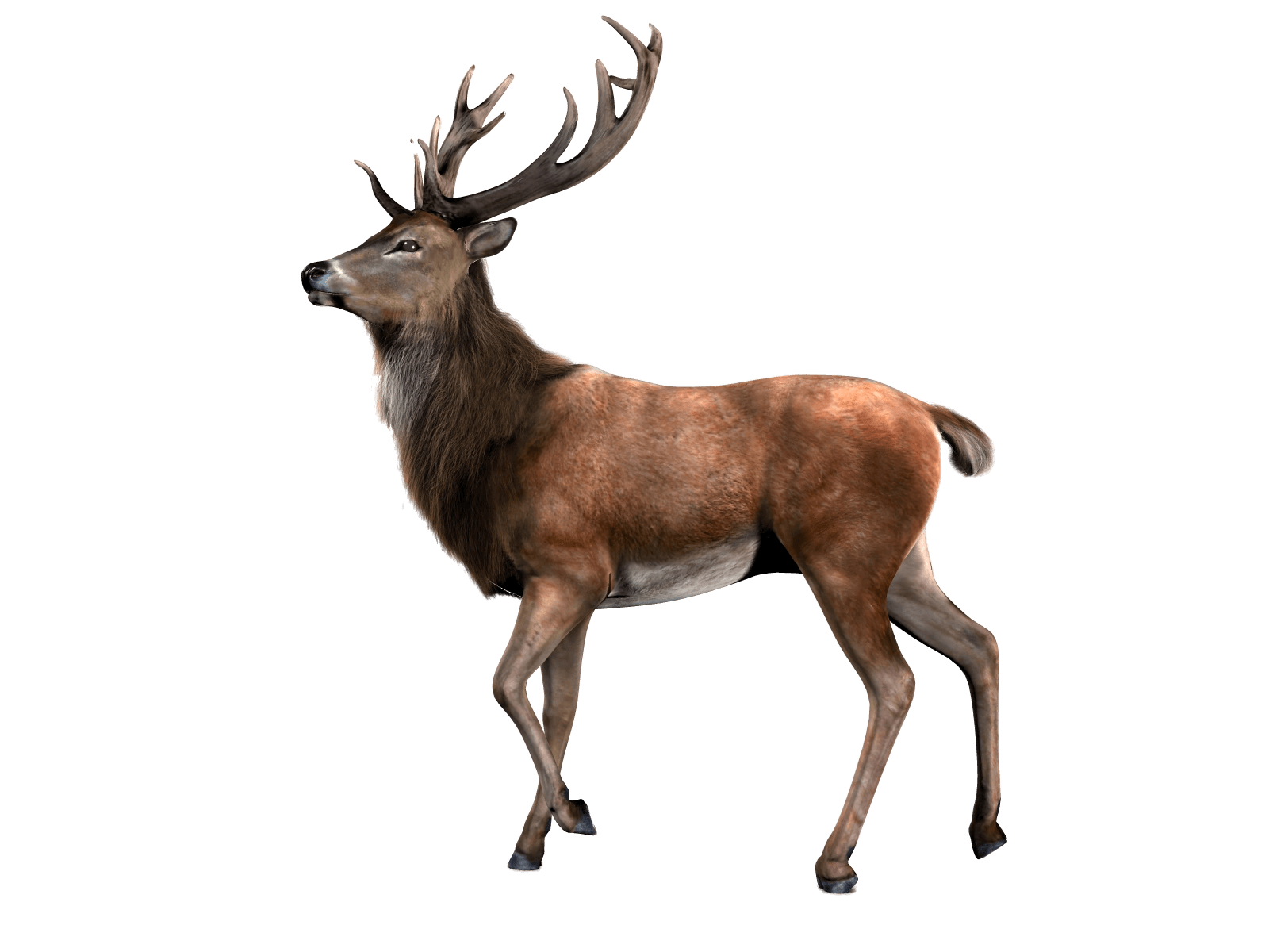 Single Deer - Deer PNG